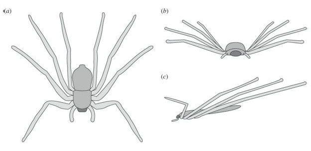 As aranhas controlam sua trajetória de voo com ajuda das pernas dianteiras