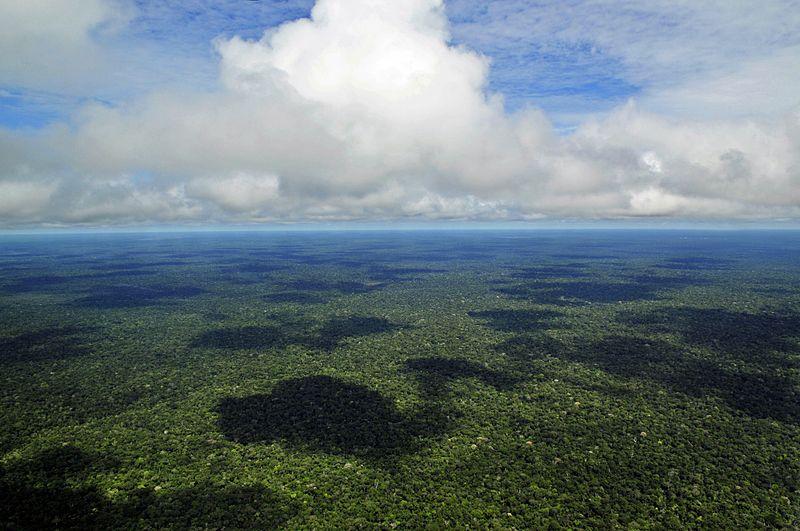 Fotografia aérea de uma pequena parte da Amazônia brasileira próxima à Manaus