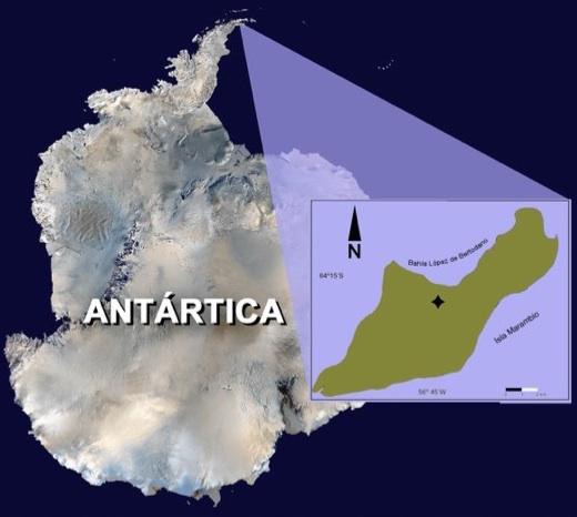 O Kaikaifilu foi encontrado em rochas do Cretácio no norte da Antártida