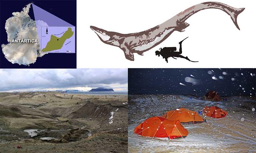 Kaikaifilu, lagarto gigante dos mares encontrado na Ilha Seymour, na Antarctica chilena