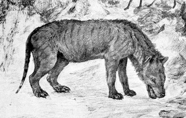 Ilustração de um hienodonte da família Hyaenodontidae