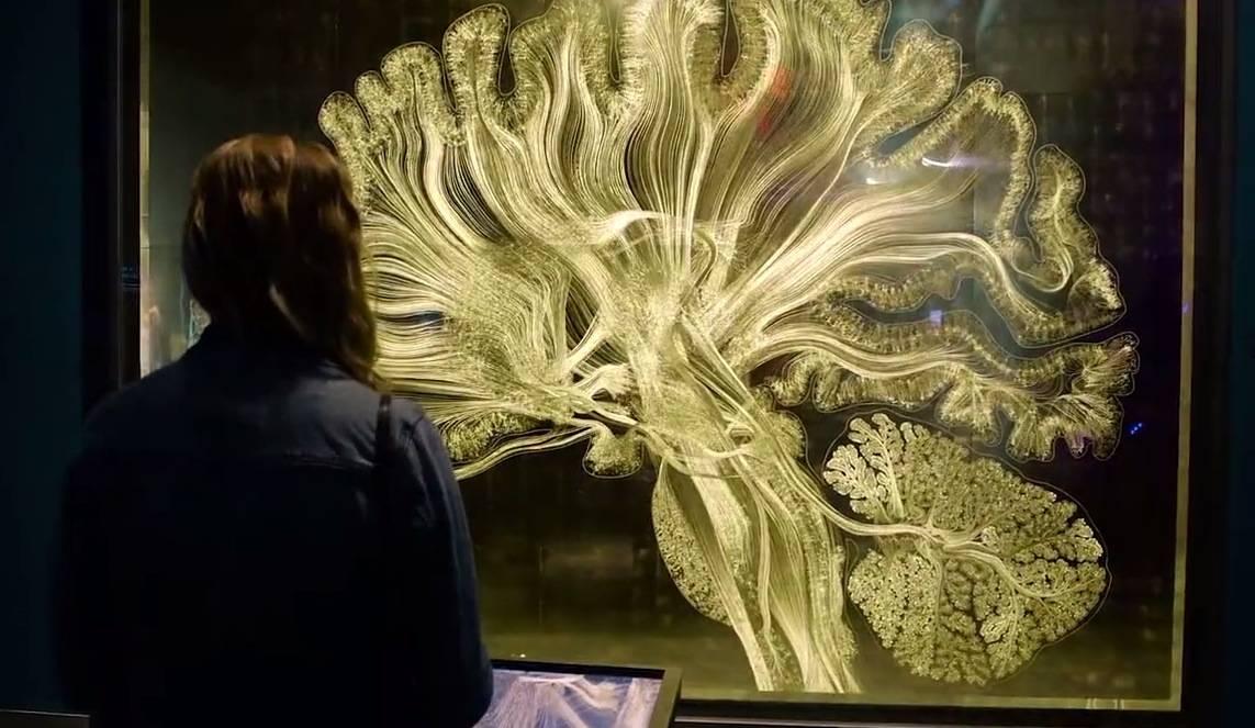 Neurologista cria obra do cérebro humano com algoritmos e folhas de ouro 8d4a8e8a98