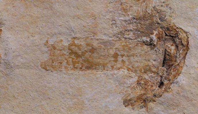 Gondwanagaricites magnificus, o cogumelo mais antigo do mundo