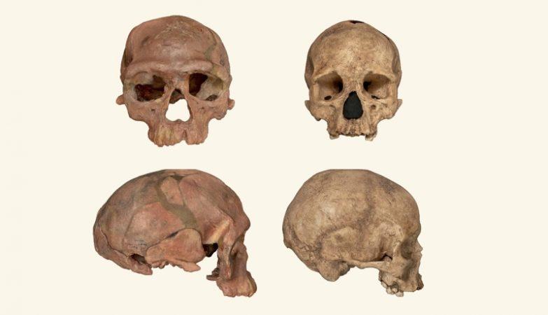 Os mais antigos fósseis de Homo Sapiens, encontrados no Marrocos (esq.) têm um crânio mais alongado do que os humanos modernos (dir.)