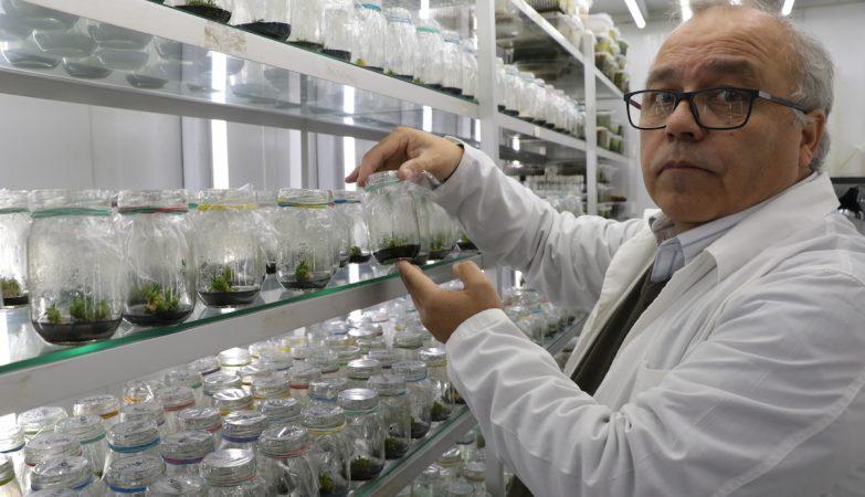 Gustavo Zúñiga, decano da Facultade de Química e Biologia da Universidade de Santiago
