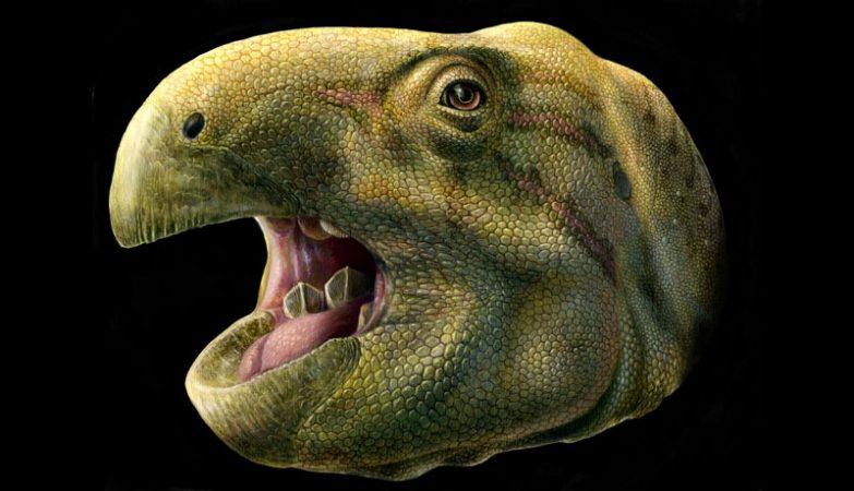 Era um dinossauro muito feio e tinha dentes que mais pareciam tesouras 4b4ac26187c