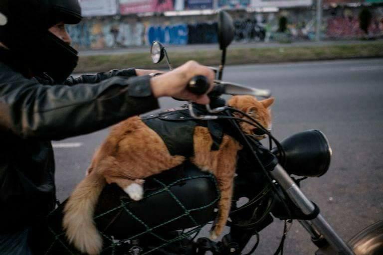 a47d8e007a3b3 Gato de óculos escuros numa moto no Rio é a coisa mais brasileira na  internet esta semana - Ciberia