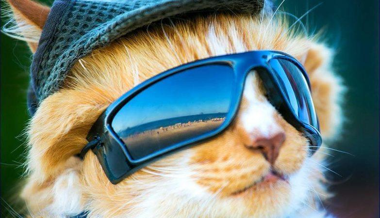9aa7e06137f64 Gato de óculos escuros é mais que um companheiro  ele ajuda o dono a ficar  longe das drogas