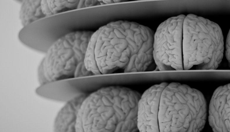 91866add1 Cientistas criam minicérebros de Neandertal em laboratório - Ciberia