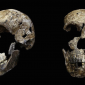 Cientistas descobrem hominídeo que compartilhou a África com os primeiros humanos