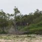 """Girafas """"albinas"""" são descobertas no Quênia"""