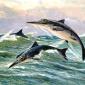 Fósseis do maior animal marinho que já existiu permitem resolver enigma