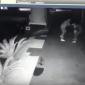 Juiz solta empresário filmado agredindo a esposa; imagens fortes